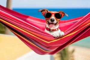Куче със слънчеви очила си почива на хамак