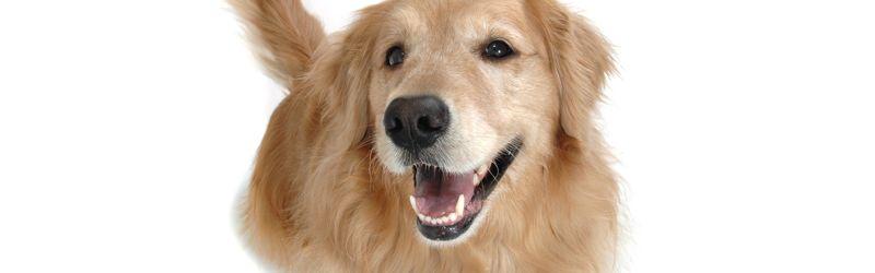 Щастливо куче се усмихва