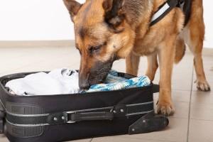 Куче подушва багаж на летище