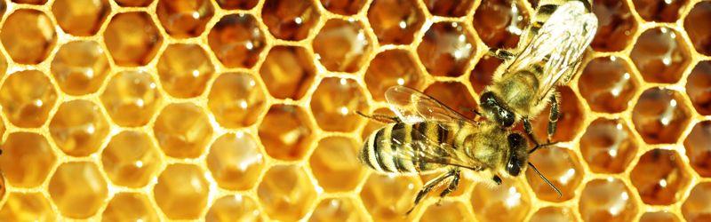 Работливи пчели